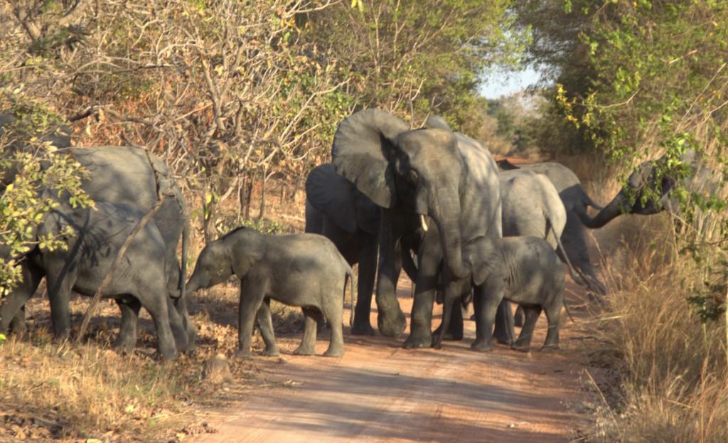 Des safaris parfaits en Tanzanie sur www.safarivo.com